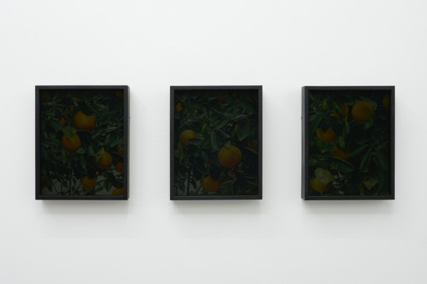 CONOR BACKMAN, Orangerie (01, 02, 03), 2014